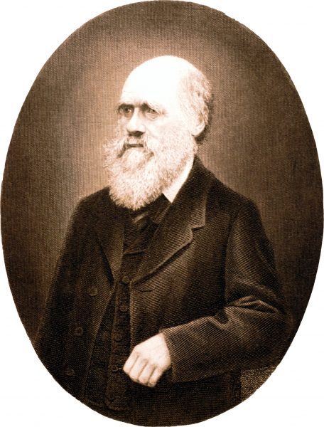 "Copper engraving of Charles Darwin. The illustration is from 4th edition German translation of ""The origin of species"" published in 1870 (copyright outdated)"